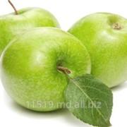 Яблоки сорт Симиренко фото