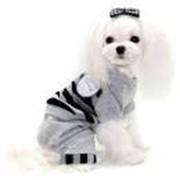 Одежда для собак и кошек в Ташкенте фото