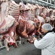 Beef quater fresh фото