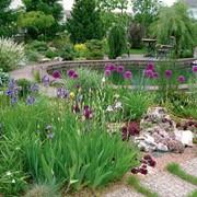 Ландшафтный дизайн. Озеленение. Благоустройство. Водоемы. Зимний сад фото