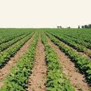 Научные исследования в сельском хозяйстве фото