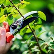 Услуга обрезки садов фото