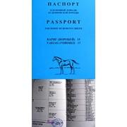 Паспорта на лошадей фото