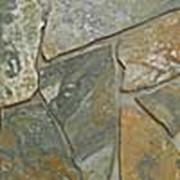 Плитняк Хамелеон фото