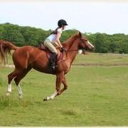 Получение необходимых знаний ухода за лошадьми фото
