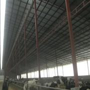 Тваринницькі ферми фото