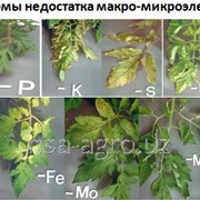 Корневая обработка помидор NPK 10-52-10 кг фото