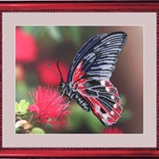Наборы для вышивания бисером Бабочка фото