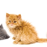 Генетические тесты для животных фото