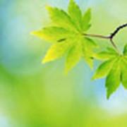 Разработка проектов нормативов предельно допустимых выбросов загрязняющих веществ в атмосферу (ПДВ) фото