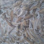 Отходы рыбные замороженные фото