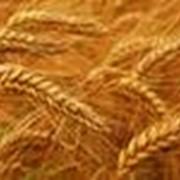 Внедрение инноваций в сельском хозяйстве фото