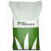Семена газонных трав универсальная DLF Trifolium фото