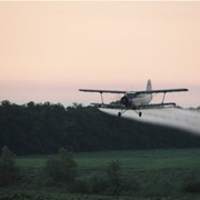 Полеты по обслуживанию лесного хозяйства фото