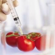 Анализ на содержание ГМО в продуктах фото