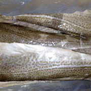 Охлажденная морская рыба, филе фото