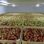 Аренда помещений для хранения фруктов фото
