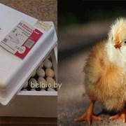 Инкубатор Несушка 60 яиц фото