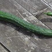 Семена Евро Огурец Китайский змей фото
