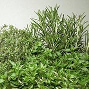 Семена многолетних трав фото