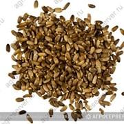 Семена расторопши! фото