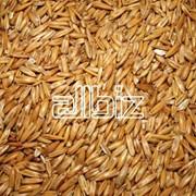 Экспорт зерна из Казахстана, ТОО Муган фото