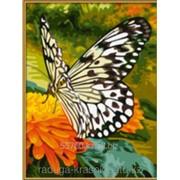 Картина по номерам Черно-белая бабочка фото
