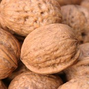 Орехи грецкие, закупка, Украина фото