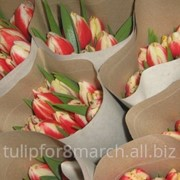 Тюльпаны к весенним праздникам фото