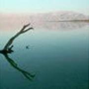 Израиль: отдых и лечение на Мертвом Море фото