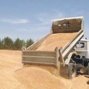 Приемка зерна. Хранение зерна на Элеваторах фото