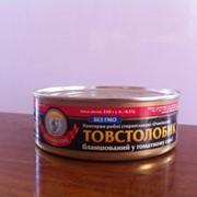 Толстолобик бланшированый в томатном соусе фото
