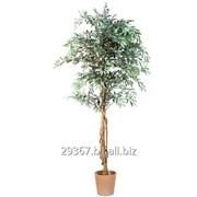 Искусственное дерево (оливковое) фото