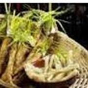 Производство растительных экстрактов (64% экстракта солодкового корня) фото
