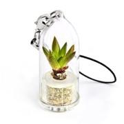 Рок Флауер Minicactus брелок с живым растением фото