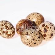Яйца перепелиные, диетические, инкубационные. фото