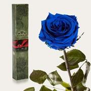 Вечные розы Синий сапфир фото