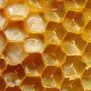 Мёд с маточным молочком. фото