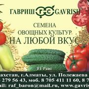 Семена овощных культур, Семена овощей, Агросопровождение. фото