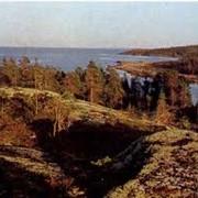 Переработка леса на пиломатериал фото