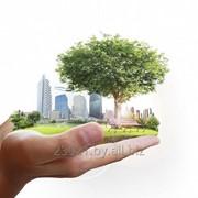 Инвентаризация объектов растительного мира фото