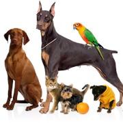 Эвтаназия животных фото