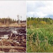 Cупервайзинг по рекультивации нефтезагрязненных земель, шламовых амбаров, засоленных почв фото