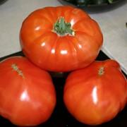 Семена томатов F1 Бутырка фото