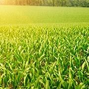 Препарат для предпосевной обработки семян Ламадор фото