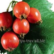 Боярышник плоды, глод фото