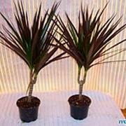 Комнатные Растения - Продажа,Оформление Офиса, Квартиры, Озеленение, Дизайн, Посадка, Лечение, Уход фото