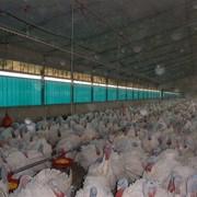 Системы кормления и поения птиц фото