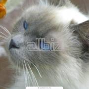 Перевозка домашних животных в Алматы фото