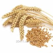 Услуги зернового брокера фото